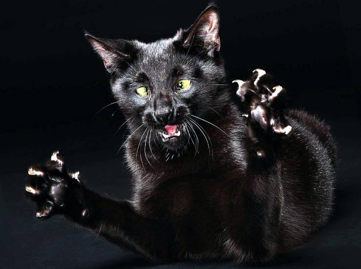 чтобы ваша кошка не стала мегерой