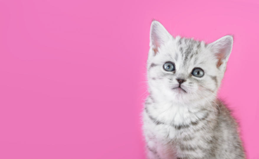 Выбираем красивое имя для котенка